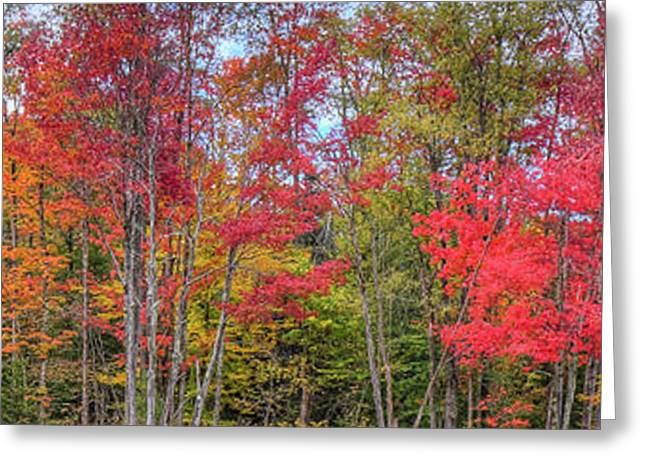 Greeting Card featuring the photograph Natures Autumn Palette by David Patterson