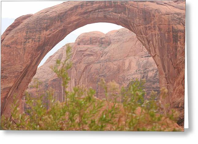 Nature's Bridge Greeting Card by Amy Holmes