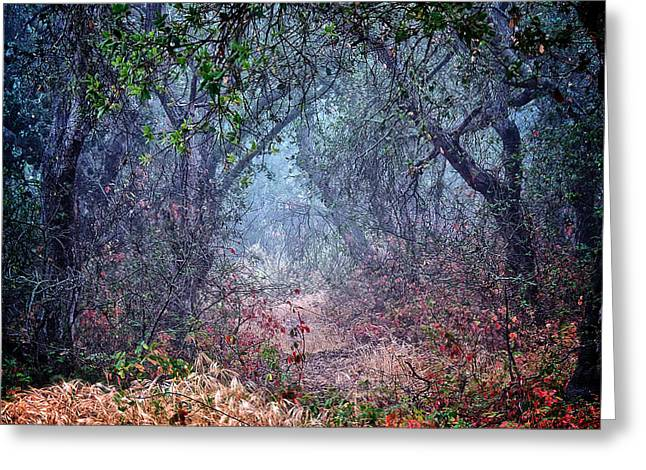 Nature's Chaos, Arroyo Grande, California Greeting Card