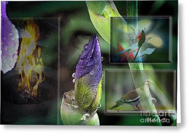Natures Collage Greeting Card
