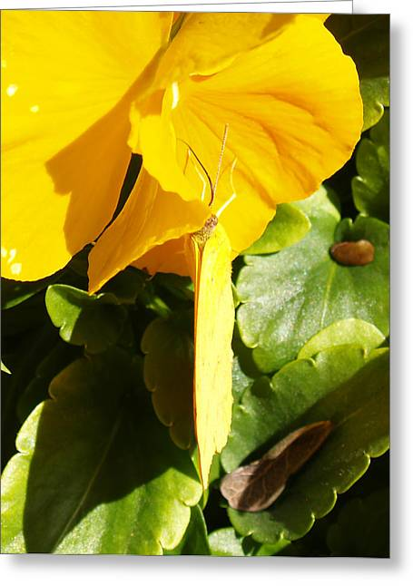 James R Granberry Greeting Cards - Natures Disquise VI Greeting Card by James Granberry