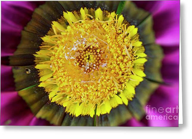 Greeting Card featuring the photograph Natures Eye by Wendy Wilton