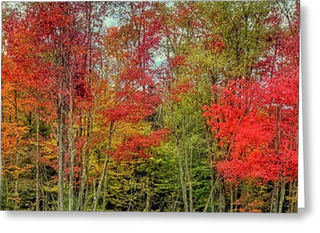 Greeting Card featuring the photograph Natures Fall Palette by David Patterson
