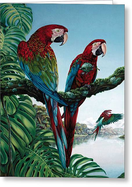 Amazon Greeting Card Greeting Cards - Natures Haven Card Greeting Card by Carole Niclasse