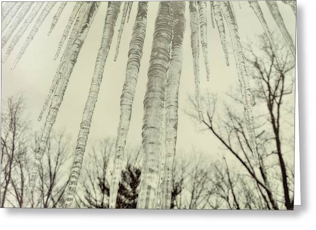 Nature's Ice Pop Greeting Card by JAMART Photography
