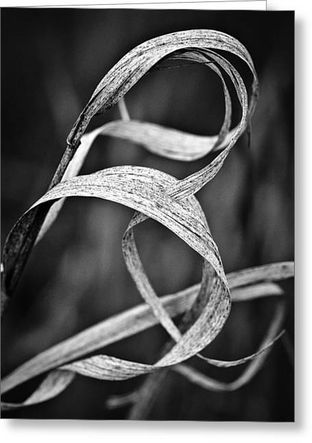 Natures Knot Greeting Card by Monte Stevens
