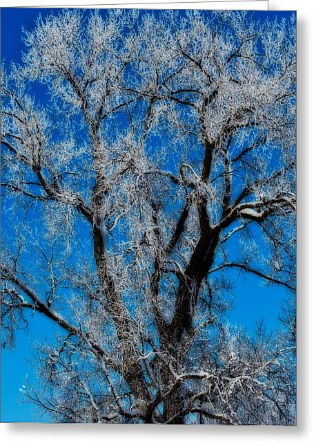 Natures Lace Greeting Card