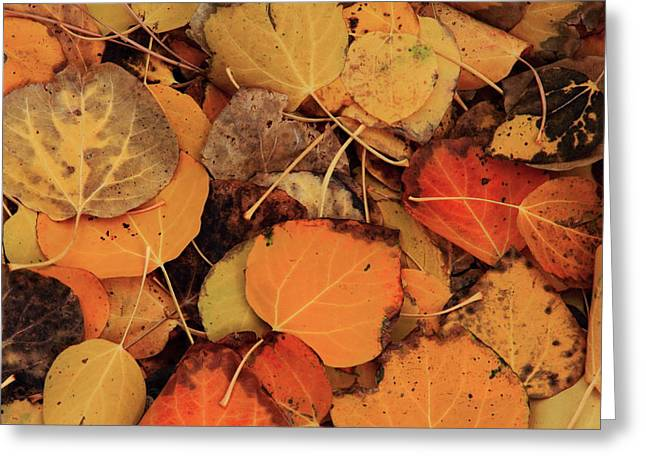 Nature Creates A Leaf Quilt Greeting Card by Diane Zucker