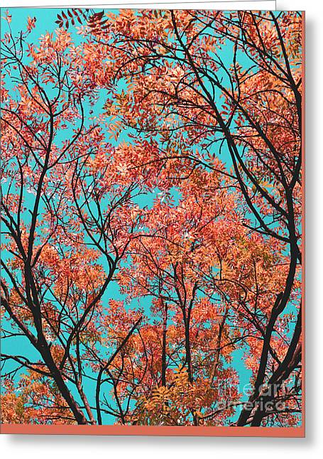 Greeting Card featuring the photograph Natures Magic - Orange by Rebecca Harman