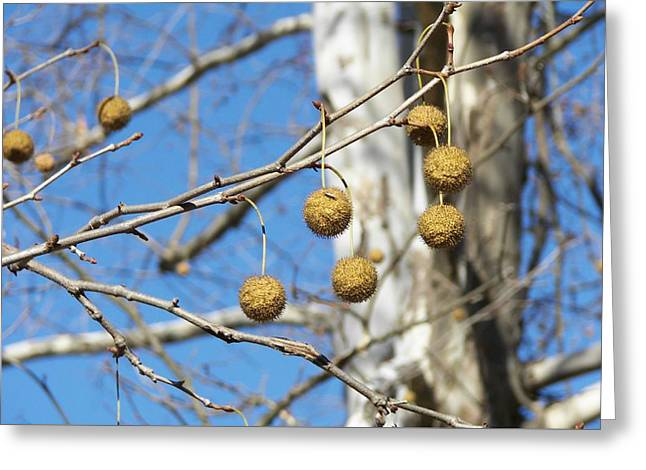 Nature's Ornaments Greeting Card by JAMART Photography