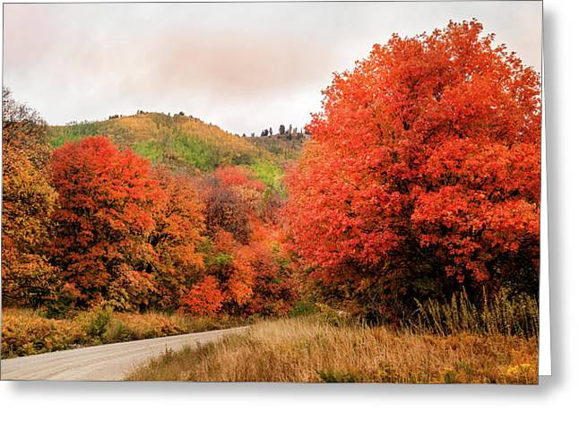 Nature's Palette Greeting Card by TL Mair