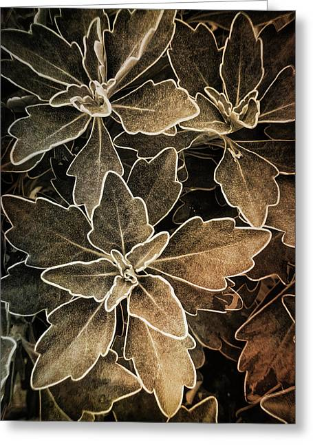 Natures Patterns Greeting Card