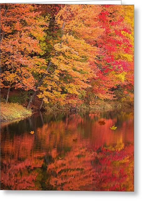 Natures Peace Greeting Card by Brenda Giasson