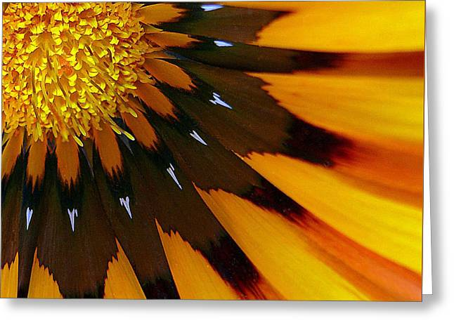Nature's Pinwheel Greeting Card by Marion Cullen