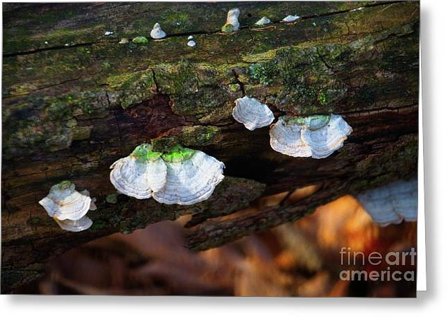 Greeting Card featuring the photograph Natures Ruffles - Cascade Wi by Mary Machare