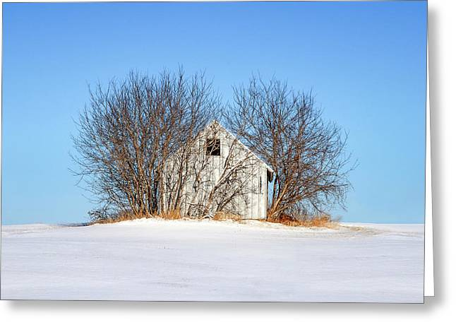 Nature's Shed Greeting Card by Todd Klassy