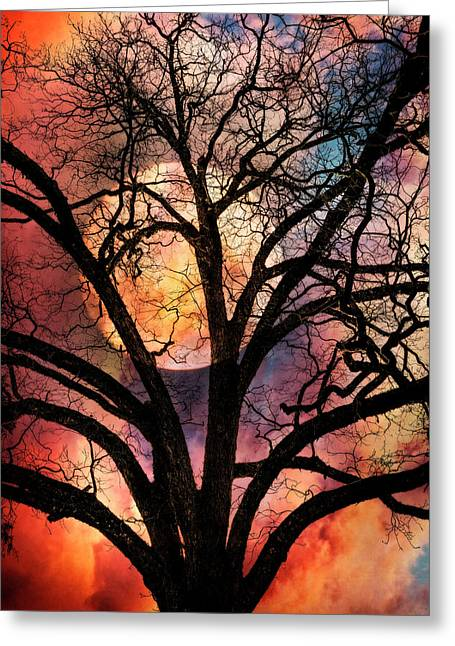 Nature's Stained Glass Greeting Card by Debra and Dave Vanderlaan