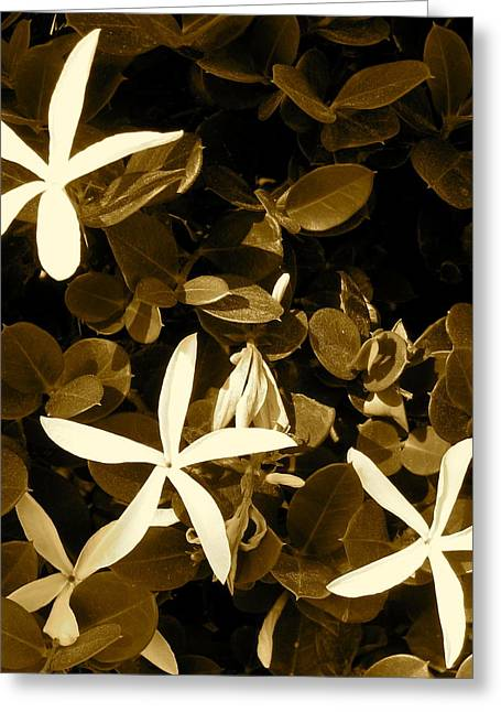 Nature's Stars Greeting Card by Ashley Butler