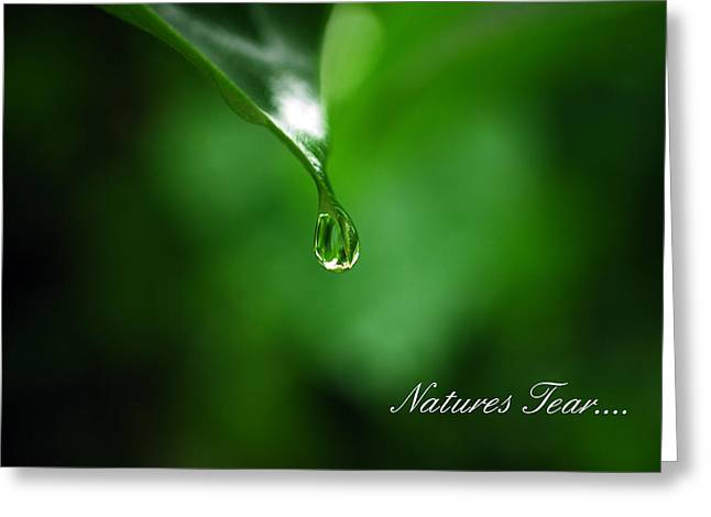 Natures Tear Greeting Card by Lori Tambakis