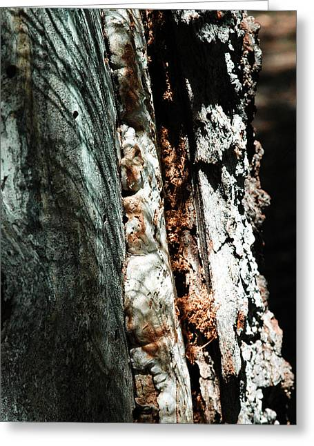 Natures Textures  Greeting Card by Brigid Nelson