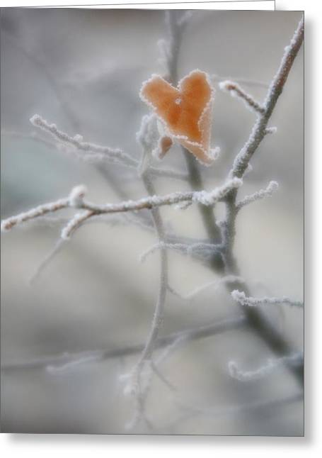 Greeting Card featuring the photograph Nature's Valentine by Diane Alexander