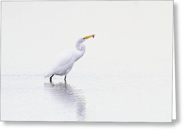 Natures Way Greeting Card by Karol Livote