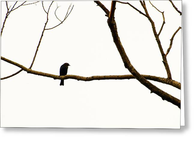 Nature - Bird On A Tree Branch 2 Greeting Card