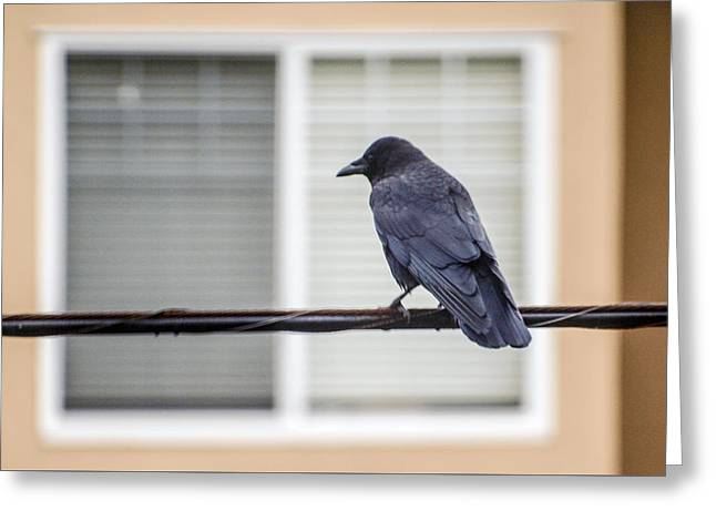 Nature - Crow On Wire Greeting Card