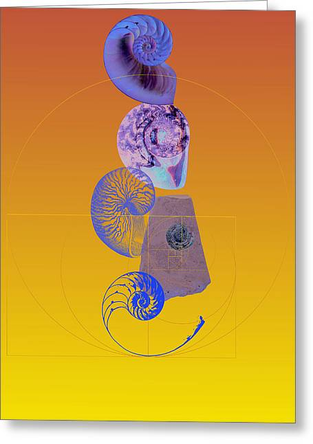 Nautilus And Ammonite Greeting Card by David Strong