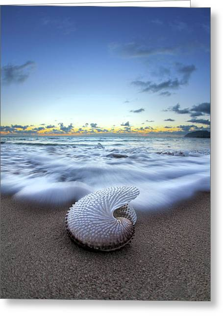Nautilus By Nature Greeting Card by Sean Davey