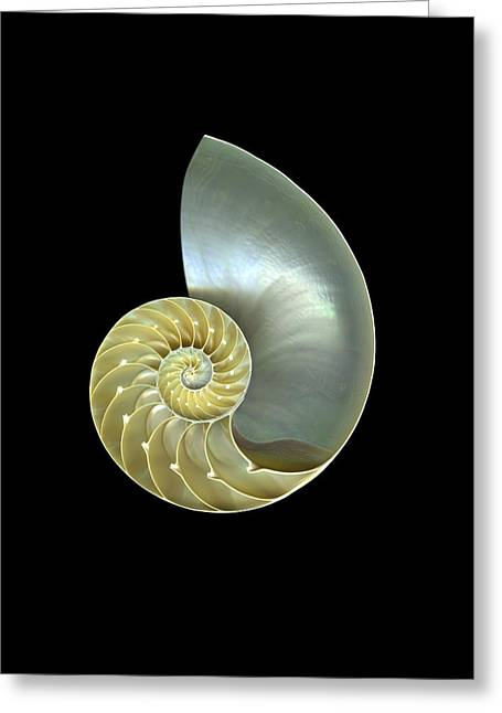 Nautilus Nr.1 Greeting Card by Christian Slanec