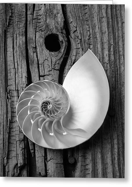 Nautilus On Wooden Board Greeting Card by Garry Gay