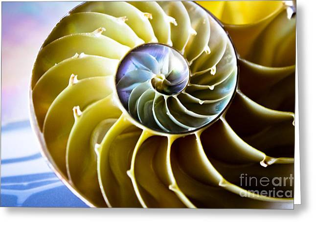 Nautilus Pompilius Greeting Card by Colleen Kammerer
