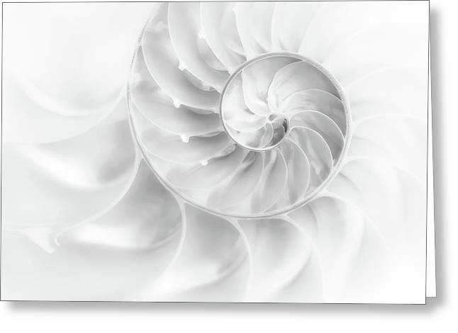 Nautilus Shell In High Key Greeting Card by Tom Mc Nemar