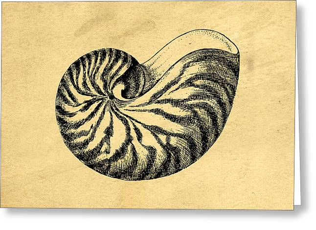 Nautilus Shell Vintage Greeting Card by Edward Fielding
