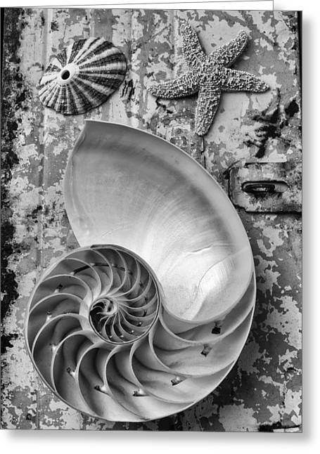 Nautilus Shell With Starfish Greeting Card by Garry Gay