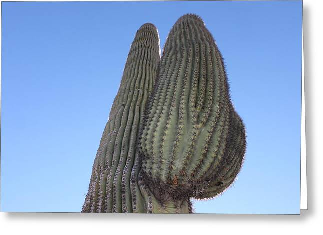 Greeting Card featuring the photograph Wickenburg Saguaro  by Antonio Romero
