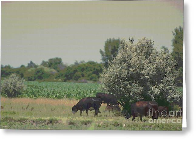 Nebraska Farm Life - Black Cows Grazing Greeting Card