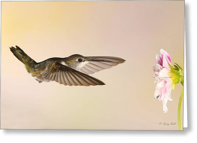 Greeting Card featuring the photograph Nectar Seeking Missile by Gerry Sibell