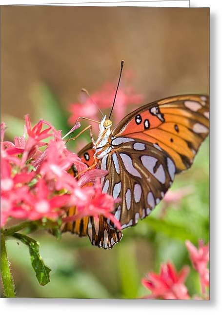 Nectaring Greeting Card by Betty LaRue