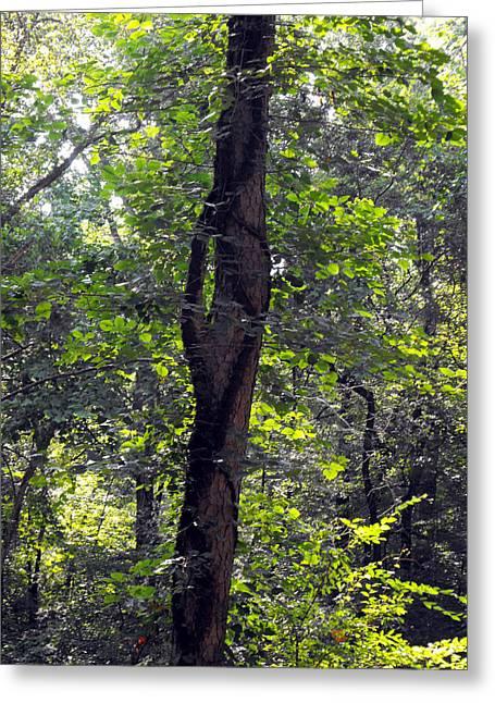 Needle Hook Tree Greeting Card by Eva Thomas