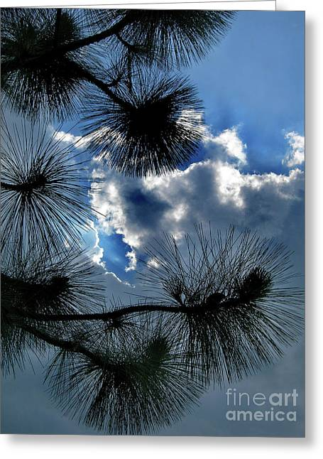 Needles In The Clouds Greeting Card by Skip Willits