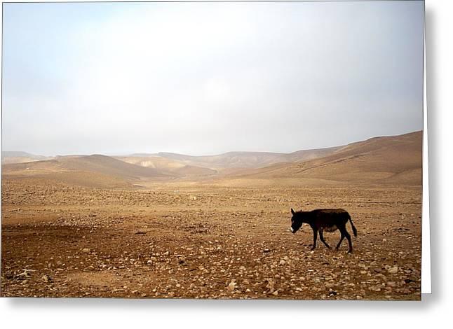 Negev Donkey Greeting Card by Rachel Figueroa