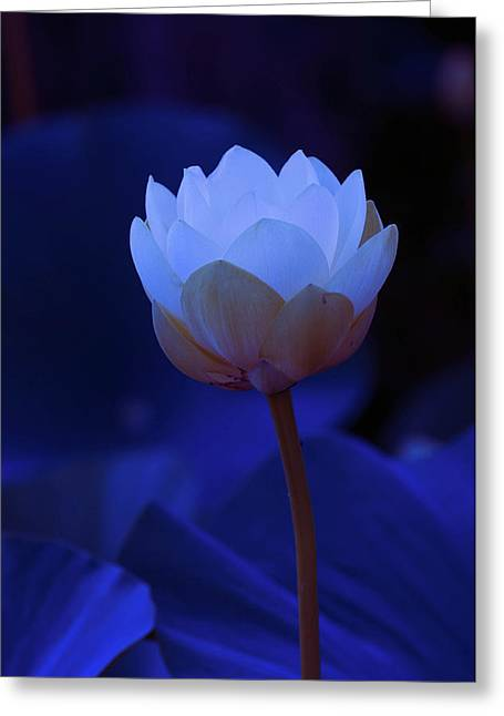 Greeting Card featuring the photograph Neon Lotus by Carolyn Dalessandro