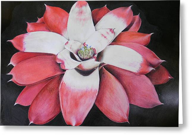 Neoregelia Madam President Greeting Card by Penrith Goff
