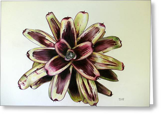 Neoregelia Painted Delight Greeting Card