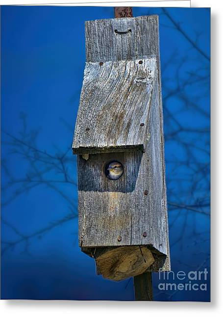 Nest Box In The Spring Greeting Card