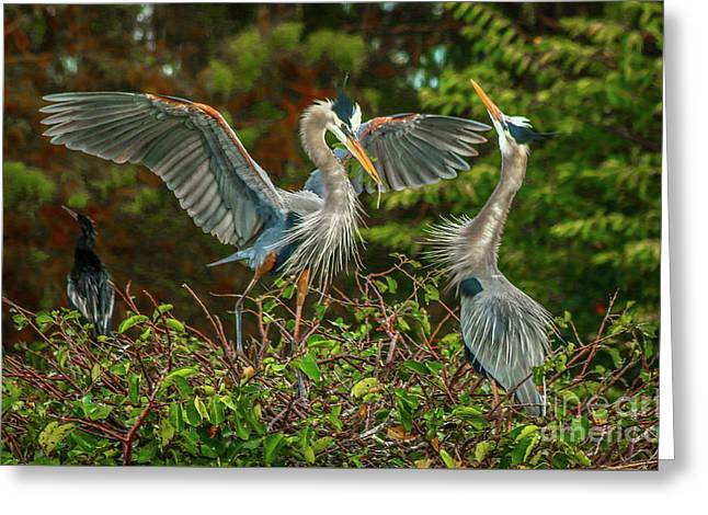 Nest Landing Greeting Card by Tom Claud