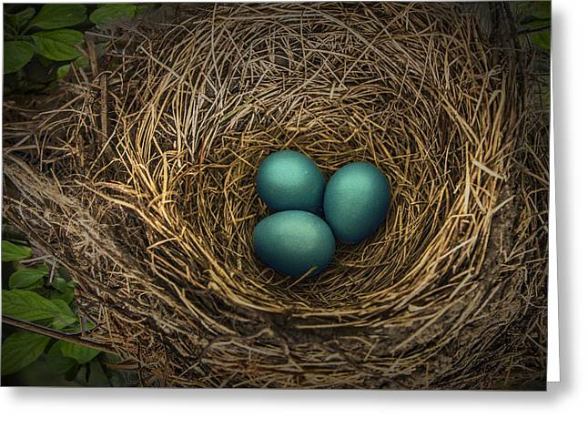 Nest Of Blue Robin Eggs Greeting Card by Randall Nyhof