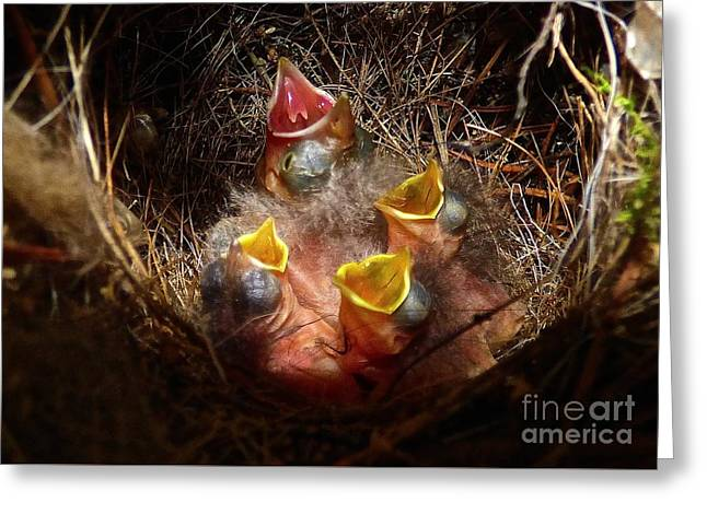 Nest With Brood Parasite Greeting Card